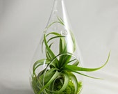 Droplet Terrarium (Medium Size) // Choose your own moss color