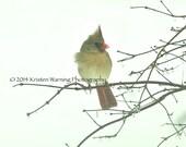 Birds, Bird Photography, Pictures of Birds, Nature, Photograph, Bird Photos