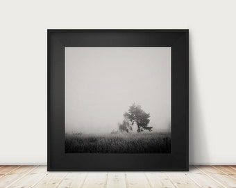 black and white photography, tree photograph, winter, fog, morning, tree, nature photography, haunting, still