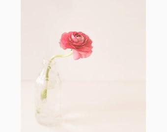 Flower print, flower photo, pink flower photography, wall decor, home decor, ranunculus, cottage decor, floral art, cottage chic, pink art
