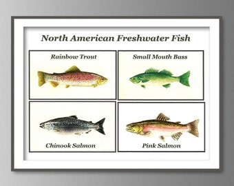 North america freshwater fish poster wall decor art print for North american freshwater fish