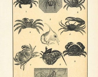 "Digital Download ""Crabs"" Illustration (c.1900s) - Instant Download of Crabs, Ocean Crustacea Illustrated Book Page"