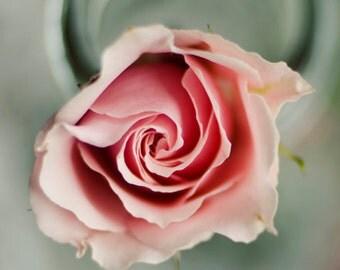 cottage chic decor, pink flower art, floral nursery art, girls decor, grey and pink decor, grey wall decor, romantic home decor, rose art