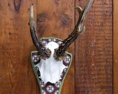 "Stylish wall sculpture, deer antler with scull, deer scull, deer mount, wall decoration, antler hook, antlers,  ""Bruno"""