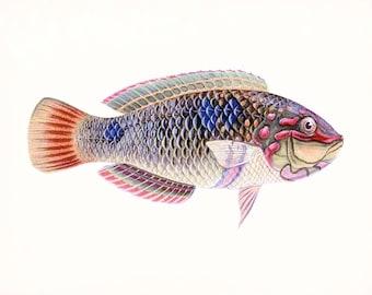 A Natural History of Fish Coastal Decor Giclee Print No. 3