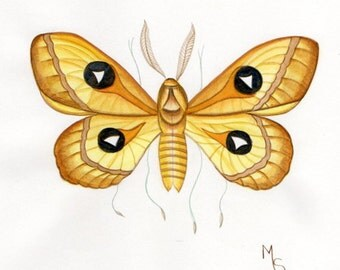 Tau Emperor Moth Print, from Original Watercolour, Entomology Insect Prints, Moths, Butterfly Picture, Art Prints and Posters Decorative Art