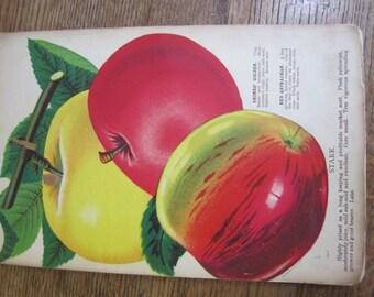 19th Century Plates, Fruit, Flowers, Trees, Berries. Wonderful  nurserymen's color plates. Scrapping, Repurpose Vredenburg & Co