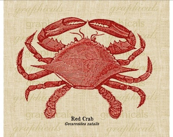 Red crab instant clip art Digital download image  Marine decor for iron on Fabric transfer burlap paper decoupage pillow tote tag No. 649