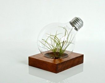 Air Plant Light Bulb Terrarium With Natural Wood Base Wood Home Decoration Wood Gift