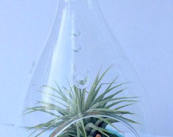 """Air Plant Orb Hanging Terrarium Clear Glass Orb Kit  beach theme Glass Tear Drop 5"""""""