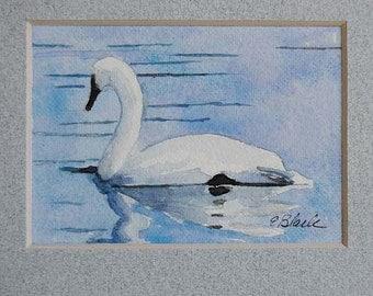 watercolor ORIGINAL Swan Nine swan, lake, ACEO, bird, trumpeter swan