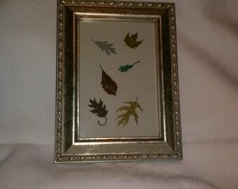 Framed Miniature Leaf Art