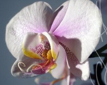 Orchidées #1 - 8x10 ( 20 x 27 cm) Fine Art Photograph