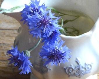 Bachelor Button Seeds Heirloom Seeds Blue Boy Bachelor Buttons Blue Cornflower Blue Wildflower