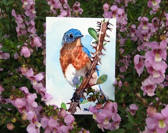 ACEO Limited Edition  - Friendly bluebird