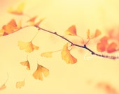 Nature Photograph Ginkgo Leaves Golden Yellow and Peach Autumn