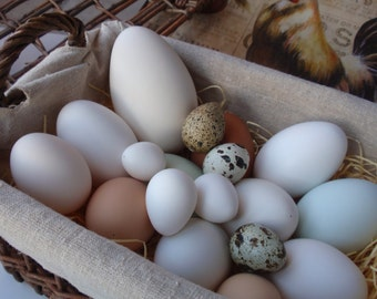 Blown Egg Assortment, 18 Eggs for Pysanky, Display, Photography, Education, or Craft Project