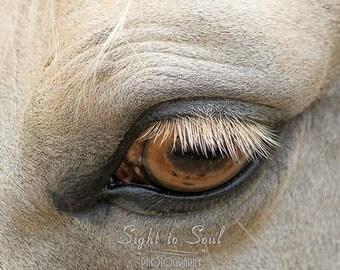 Horse Eye Photo, palomino quarter horse photography, western wall art, ranch decor, equine art