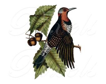BIRD and leaves, antique illustration, Instant Download, natural history illustration no.362