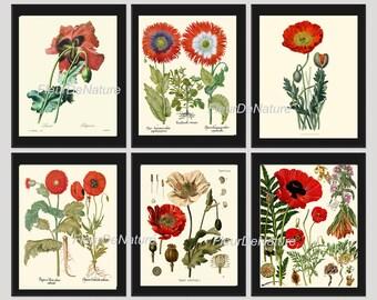 BOTANICAL Print SET of 6 Art Prints 8x10 Beautiful Red White Papaver Opium Poppy Plate Antique Vintage Illustration Painting Flower Chart