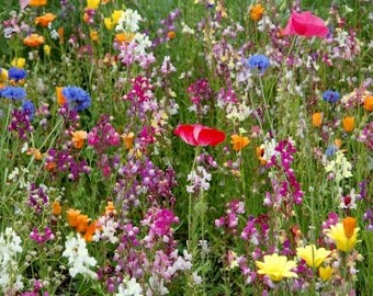 Hummingbird Flower Mixture, Cover a Large Area, Attracts Butterflies, Annual and Perennial Mix, 50 Seeds