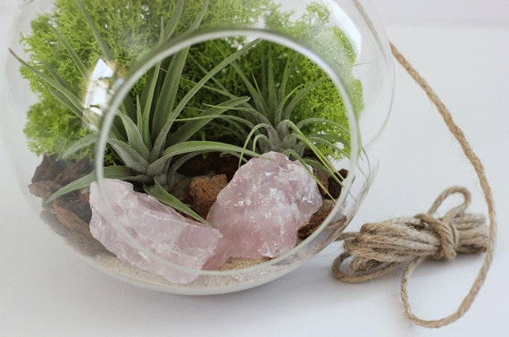 DIY Terrarium Kit || Rose Quartz + Two Air Plants || Large Hanging
