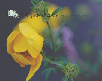 Yellow Among Dusk Fine Art Macro Floral Photography Print, Yellow Flower Photo, Macro Nature Wall Decor