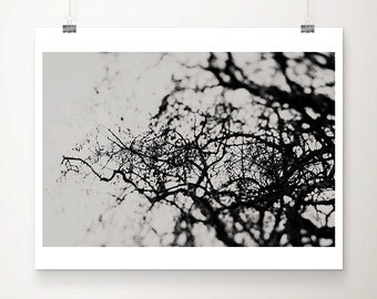 black and white photography nature photography tree photograph surreal print tree print abstract art dark photography dark art