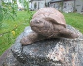 Oscar-The Snapping Turtle statue