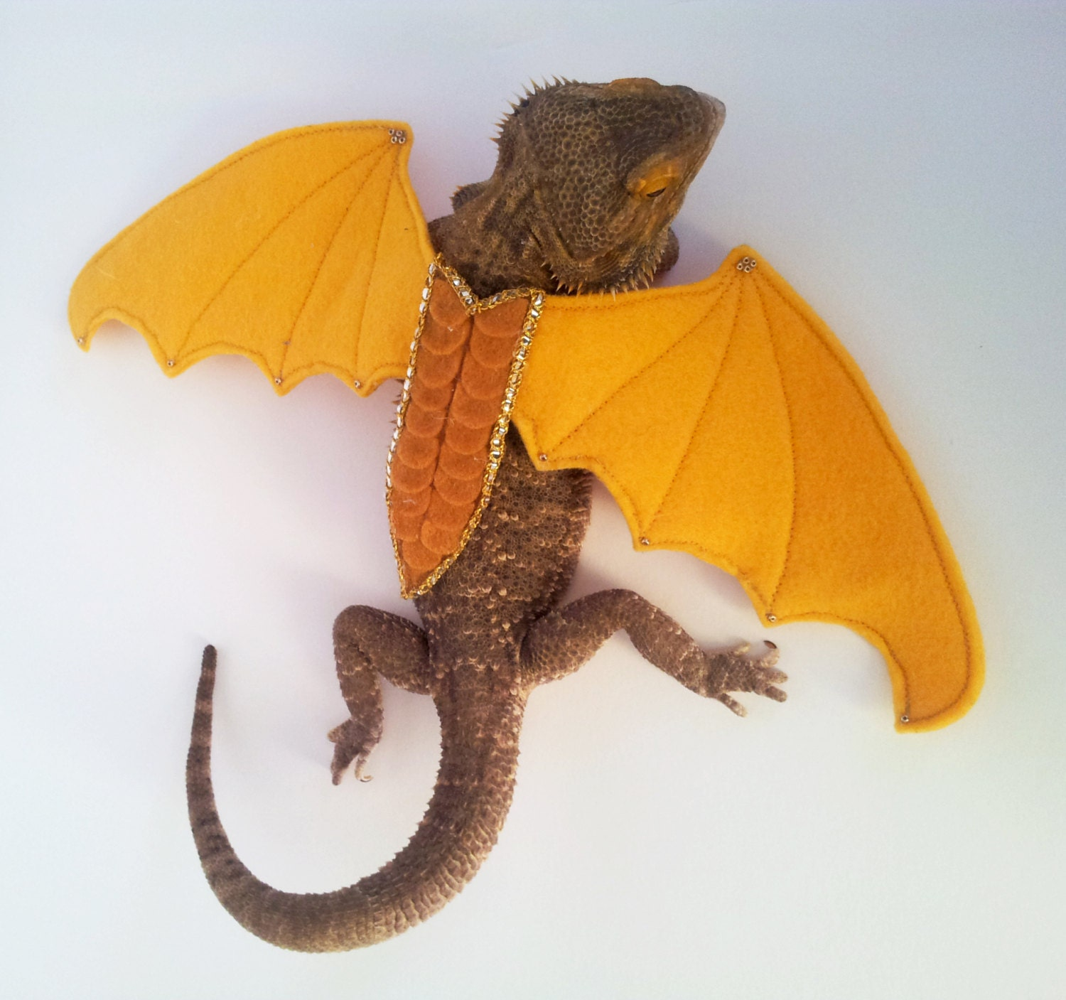 Bearded Dragon Wings Goldenrod by GetSTUFT on Etsy - photo#10