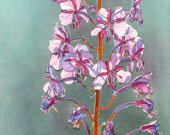 Fireweed-Rosebay Willowherb original watercolor art