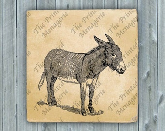 Donkey Digital Download for collages fabric iron on T-shirt transfer burlap pillows Vintage image Instant printable print at home Clip Art