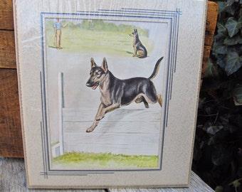 Vintage Matted Dog Print - German Shepher Dog Print - National Geographic Dog Edwin Megargee - Vintage Dog Agility