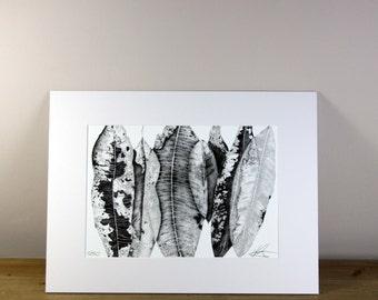 Leaf Decay Limited Edition Print