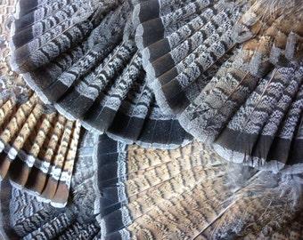Wild Ruffed Grouse Tail Fan -- WIld Bird Feathers -- Free Shipping*