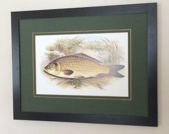 """Framed and Mounted Fish Print Wall Art 12"""" x 16"""" carp print, fish print"""
