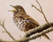 Aceo Bird Print, Song Thrush. From an Original Painting by JOHN SILVER. Personally signed. BD003AC