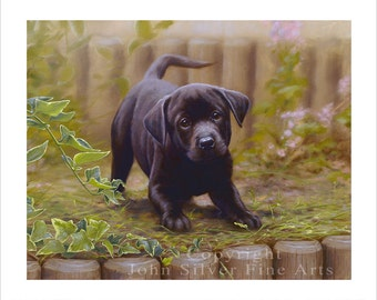 Black Labrador Dog Portrait. Ltd Edition Print. Personally signed and numbered by award Winning Professional artist JOHN SILVER. jsfa026