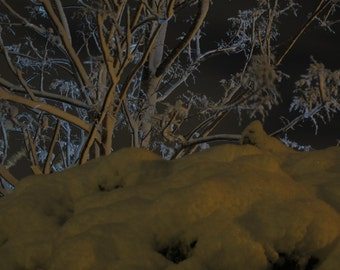 Moonlight Snow (5) - Digital Photo for Download - A Snow scene on a Beautiful Moonlight night - Jerusalem mountains. Nature Scene photo