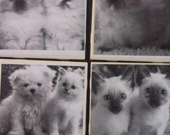Kitten Tile Coasters