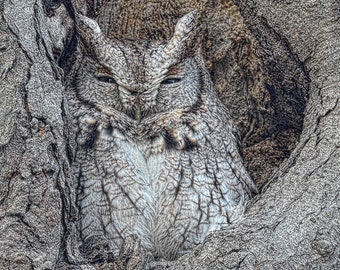 eastern screech owl,all occasion card,bird photography,nature photography,unique card,blank card,hidden bird,camouflage bird,bird of prey
