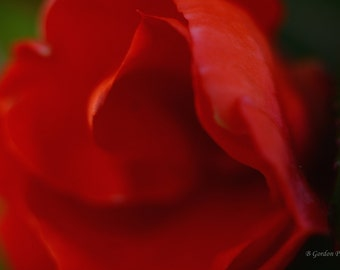 Fine art photograph, close up, red flower petals, soft background, pleasing and calming