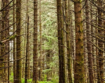 Forest Photo, Forest Photography, Forest Wall Art, Forest Wall Decor, Woodland Photography, Woodland Wall Decor, Woodland Wall Art 4x6-24x36