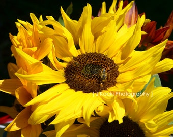 SUNFLOWER BEE, bright yellow flower warm  colours