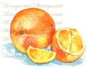 Watercolor Fruit Clip Art / Watercolor Orange Clip Art / Hand Painted Clip Art / Commercial Use Graphic / Digital Orange Graphic, JPG & PNG