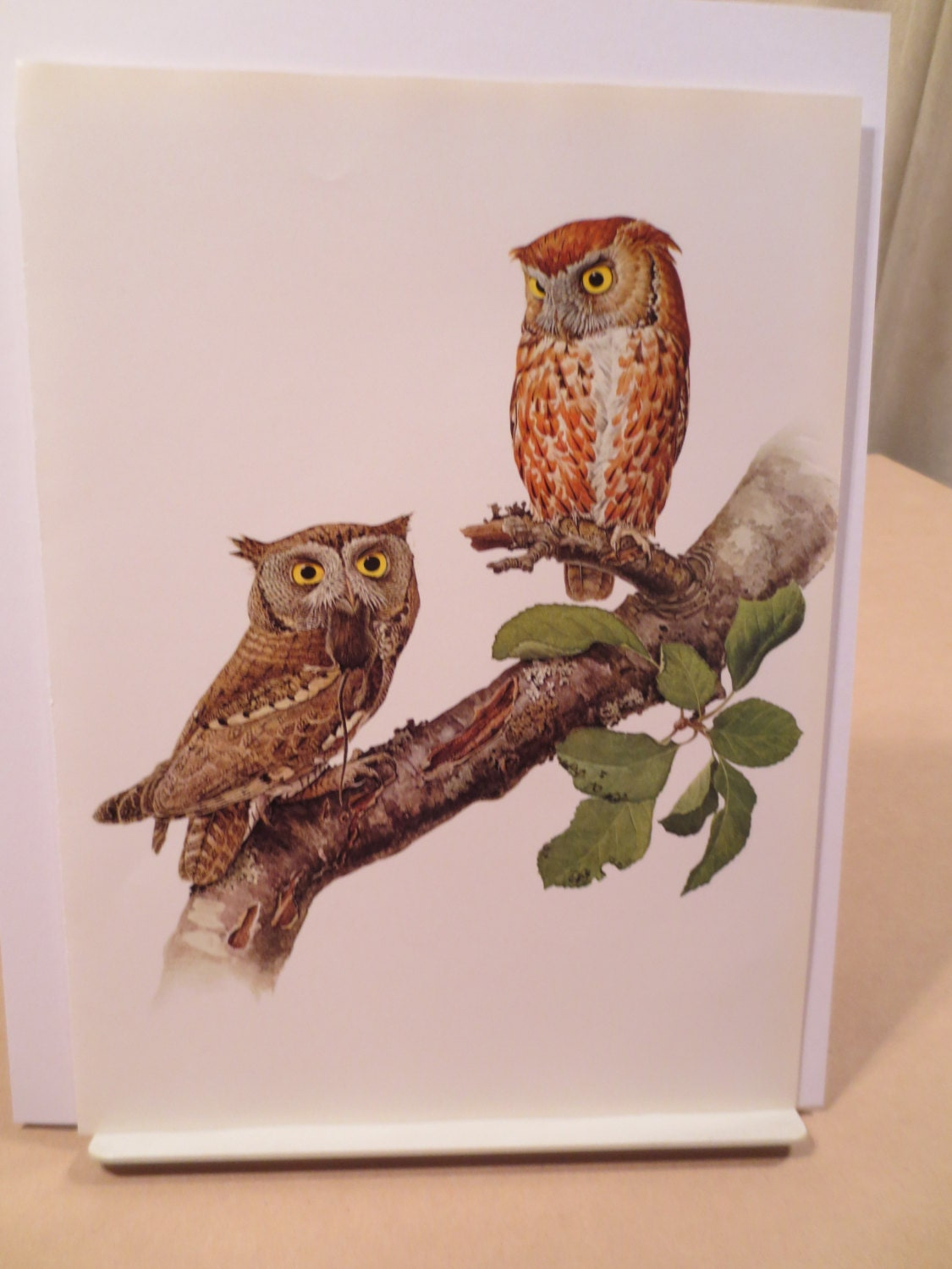 Vintage Screech Owl 1960s Frameable Picture Wall Art