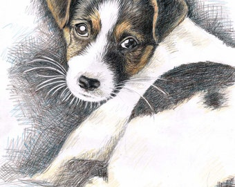 Jack Russell Terrier Puppy - Fine Art Print