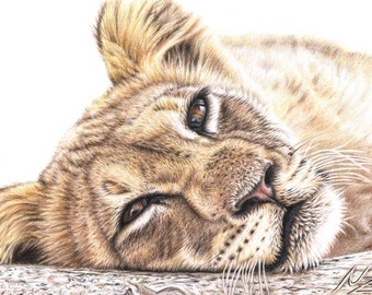 Tired Young Lion - Fine Art Print