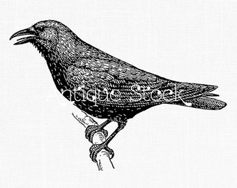 Crow Line Art - Black Bird Image - Digital Download for Decoupage, Altered Art, Collages, Cards, Scrapbooking, Invites, Crafts...