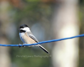 Chickadee Photography on 5 blank 5x7 note cards